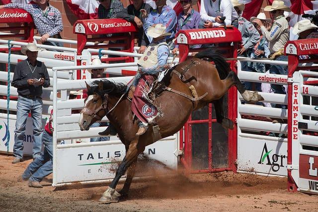 馬鞍騎乘 Photo Credit: Chris Bolin / Calgary Stampede