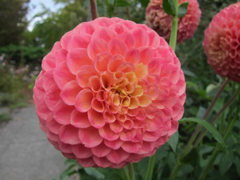 botanical garden seattle