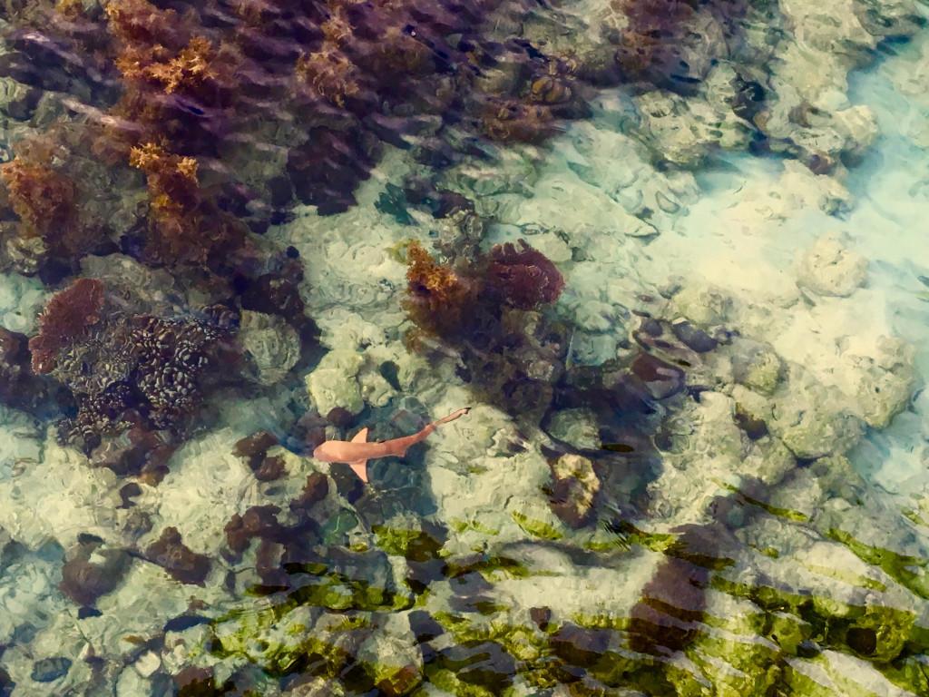 Baby sharks at Apulit Island, El Nido, Palawan, Philippines