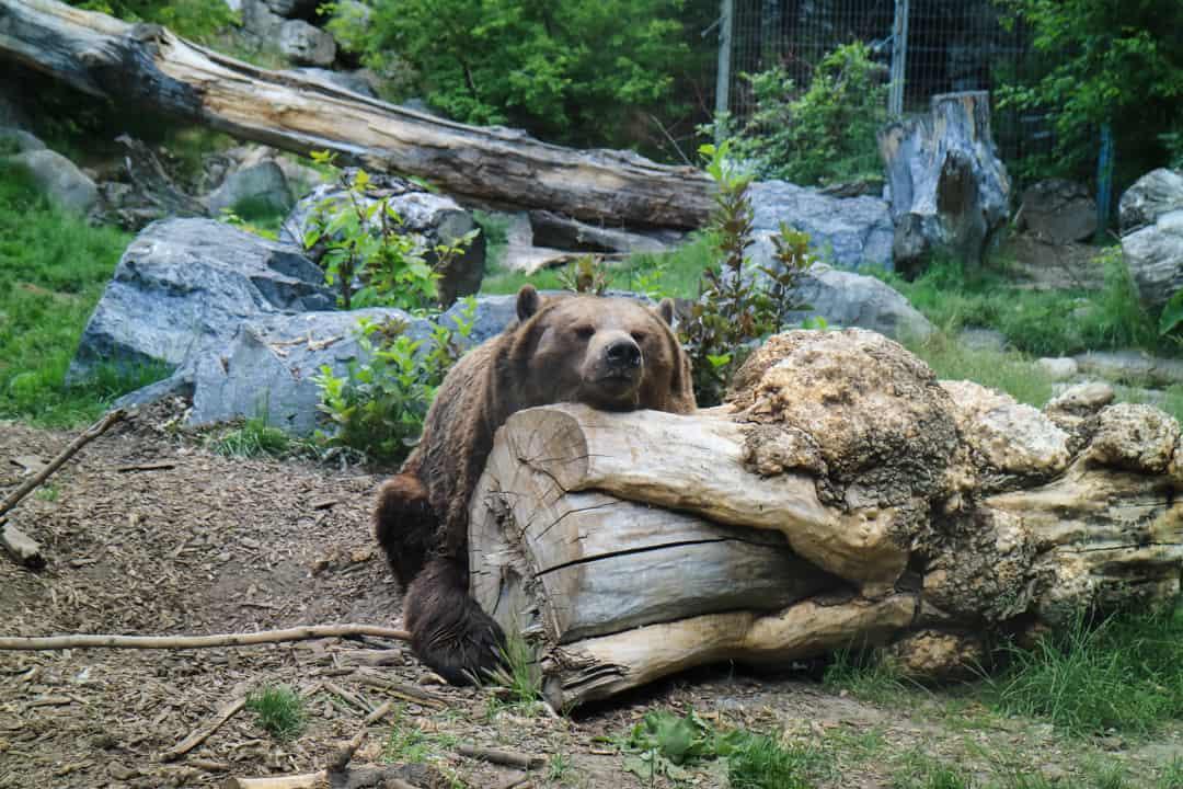 Summer Activities Calgary: Calgary Zoo