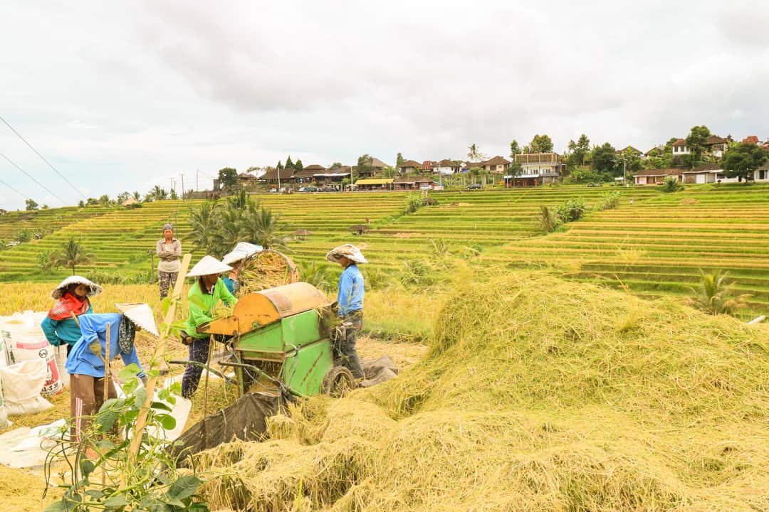 Jatiluwih Rice Terrace Bali Indonesia