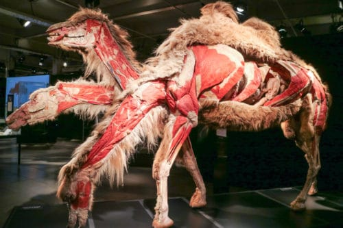 Animal Inside Out Body World. Science Centre Montreal