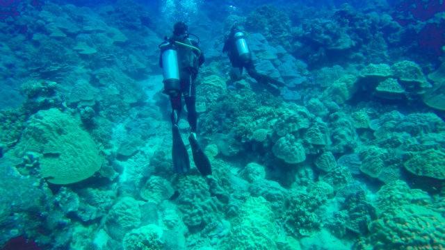Diving Rarotonga Cook Islands
