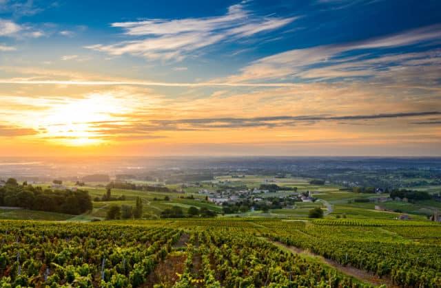Beaujolais vineyard France