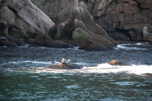 Bonaventure Island Gaspesie Perce