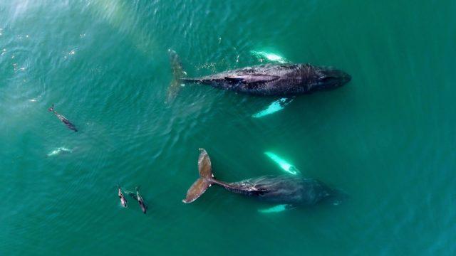 Bay of Fundy Nova Scotia Whale Watching