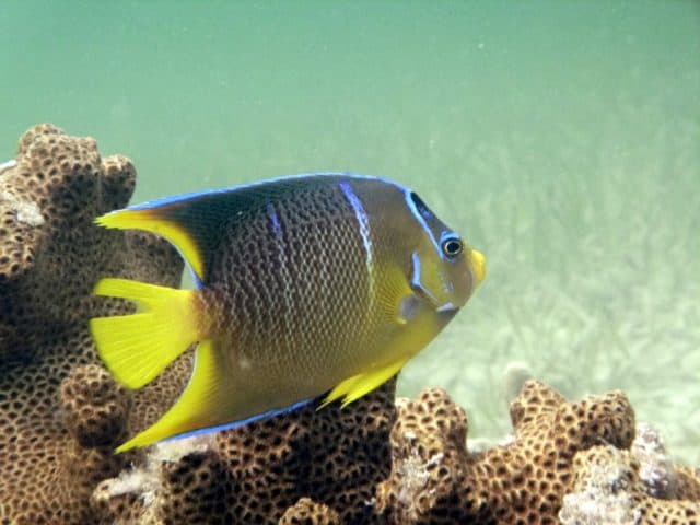 exotic fish in Key West Florida Keys