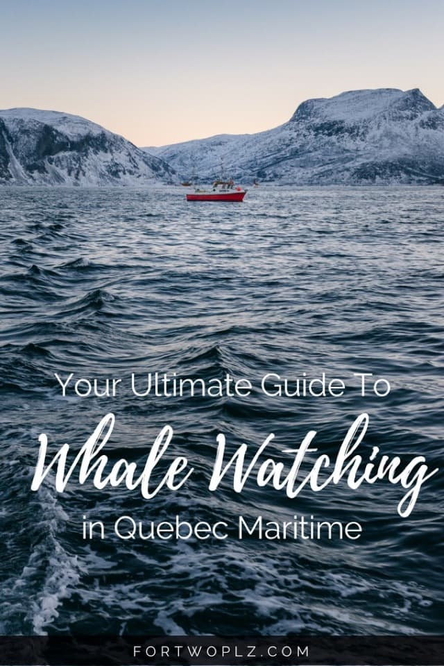 Whale watching is one of the best things to do in Quebec, Canada. Want to know the best spots to meet whales? And the best season for it? Check this post for everything you need to know to plan an epicwhale watchingadventure in Tadoussac,Quebec. #travealcanada#travelguide#tripplanning#traveltips#quebec#itinerary#thingstodo #adventuretravel#nature#wildlife#whalewatching #beluga #whales #humpback #humpbackwhales #belugawhale #bucketlist #traveldestinations #wanderlust #roadtrip