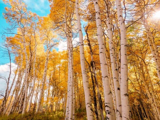 Aspen-Colorado_Fall