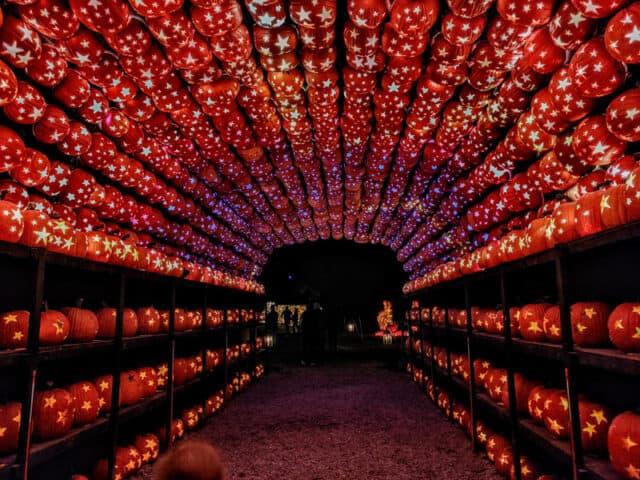 Catskills-NY-Great-Jack-O_Lantern-Blaze