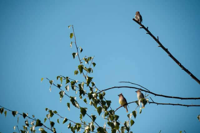 birds spotted in blackie spit park in surrey bc