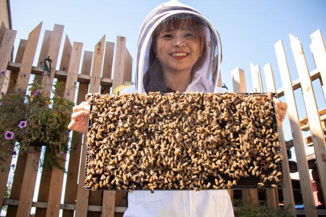 honeybee centre surrey bc